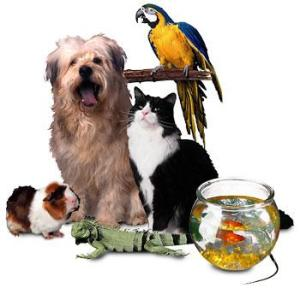 Pet Clinic @ Pet Supplies Plus  | Easton | Pennsylvania | United States