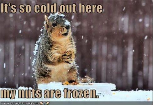 Squirrel-Meme